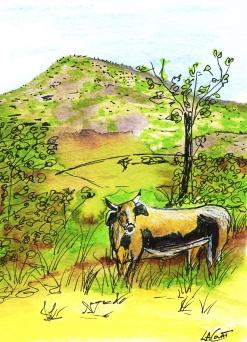 cuba cow